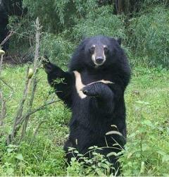 クマが「覆いかぶさり…」男性が襲われ顔をけが 秋田