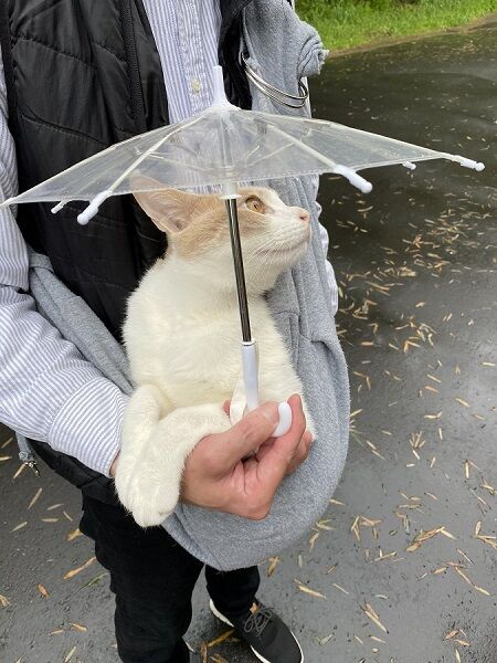 ミルくんの雨の日の散歩スタイル