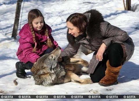 packofwolves-5-620x