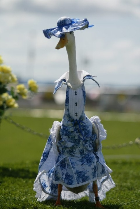 Blue-Dress-Duck-620x