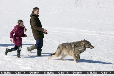 packofwolves-2-620x