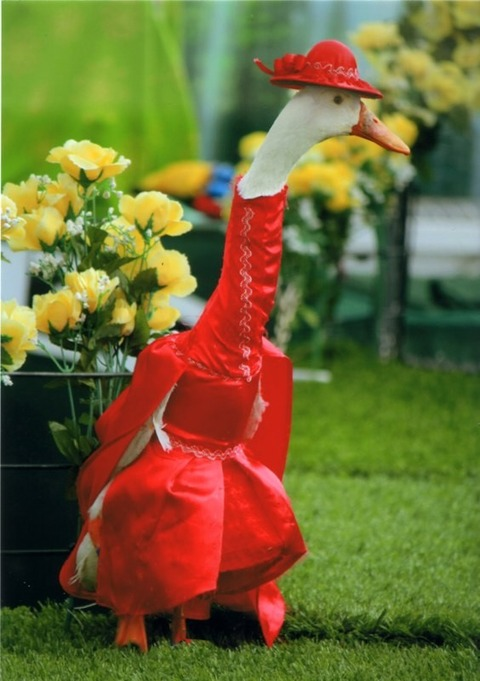 Red-Duck-620x