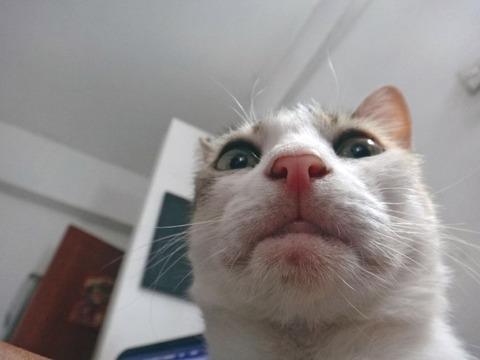 selfie6-934x