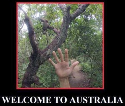 crazy-things-in-australia-28