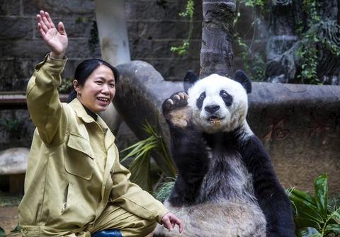 Panda-Basi (1)