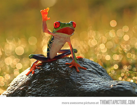 funny-frog-happy-hi