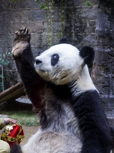 Panda-Basi-gestures-to-the-audience