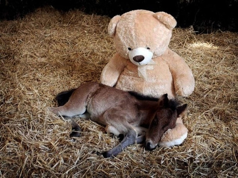 cool-pony-teddy-bear-barn-cuddling
