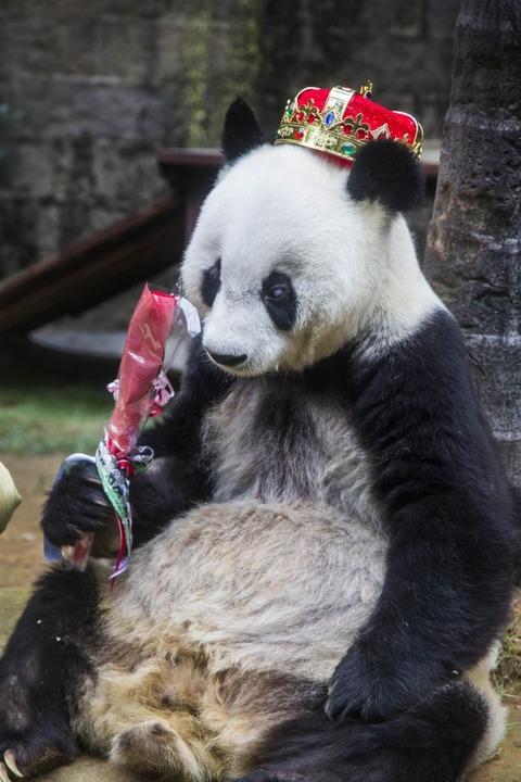 Panda-Basi (2)
