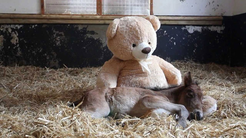 cool-pony-teddy-bear-barn-love