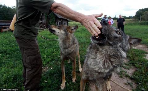 packofwolves-8-934x