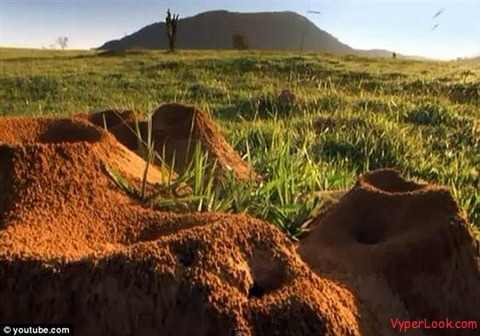 Giant-Ant-Hill-Megalopolis-Discovered-In-Brazil-2