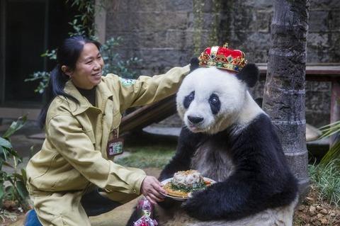 Panda-Basi