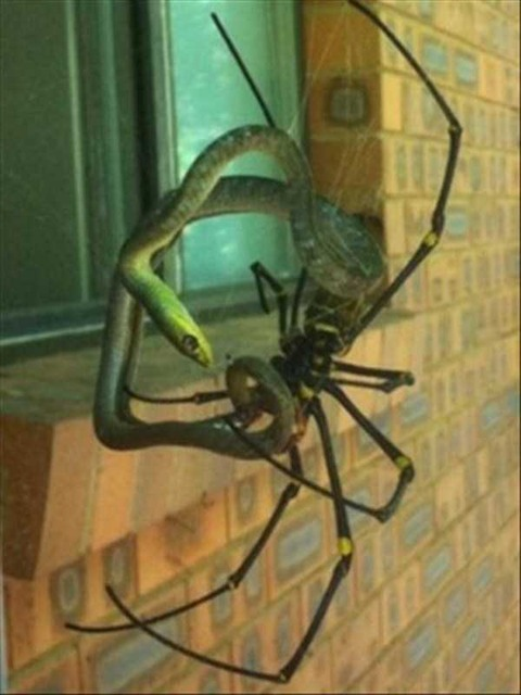 crazy-things-in-australia-5