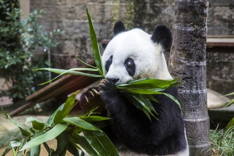 Panda-Basi-enjoys-her-35th-birthday