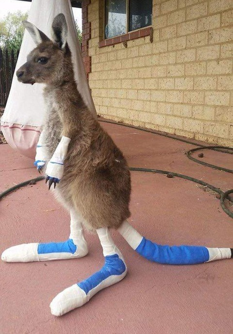 30658FB600000578-3409229-A_kangaroo_joey_admitted