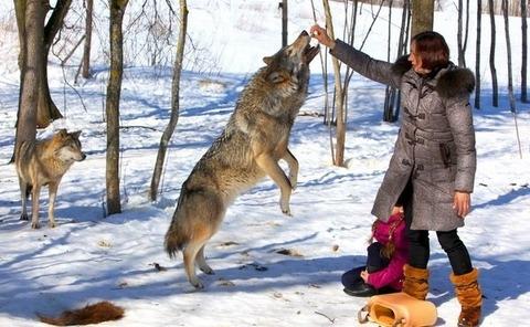 packofwolves-6-620x