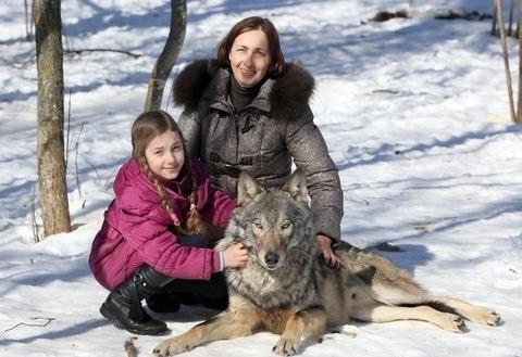 packofwolves-1-620x