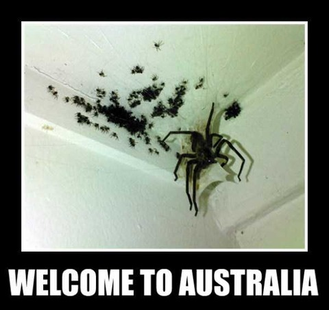 crazy-things-in-australia-30