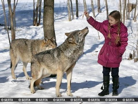packofwolves-3-620x