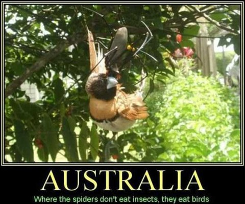 crazy-things-in-australia-3
