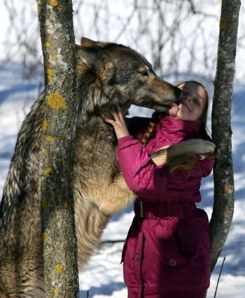 packofwolves-4-620x