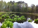 2011523どじょう池