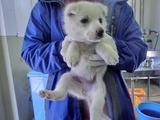 2012227センター子犬2