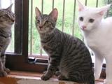 ワンライフ子猫7