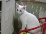 ワンライフ子猫2