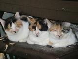三毛さん3匹