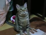 ワンライフ子猫9