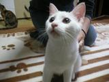ワンライフ子猫41オス