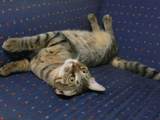 ワンライフ子猫3