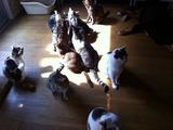 20111015日だまりの猫達