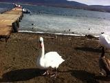 2012219山中湖