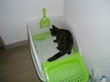 せいちゃん トイレ