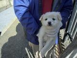 2012227センター子犬1