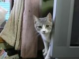 ワンライフ子猫4
