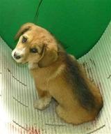 2012227センター子犬3