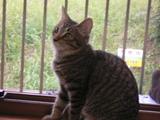 ワンライフ子猫6