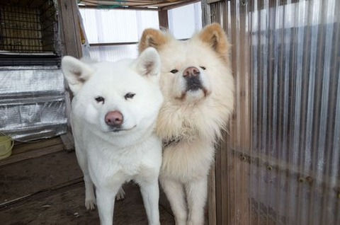 wasao&tubaki