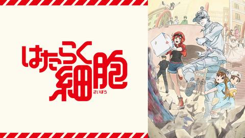 hatarakusaibou_anime