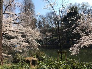 2018.03.25.井の頭公園