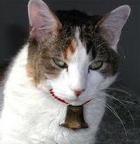 Bell the cat 未熟者のこーて