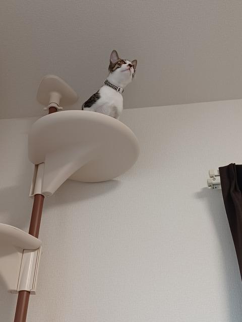 猫もタワーから落ちる