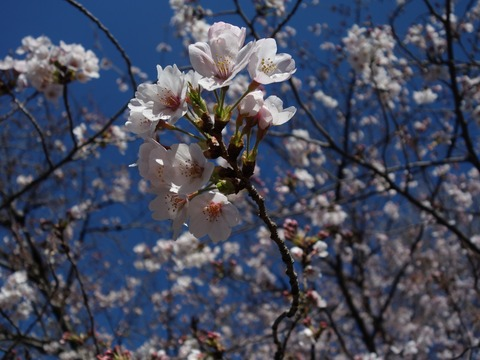 善福寺川緑地公園