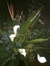 7/20 お花