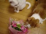 20061226花束猫