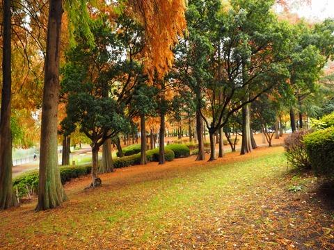 桃山公園 (6) (1024x768)